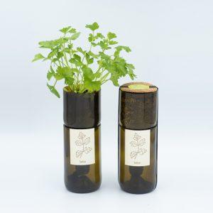 grow-bottle-perejil