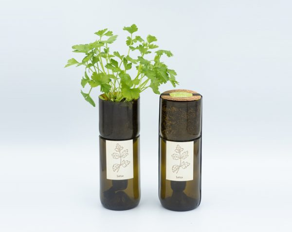 grow-bottle-perejil