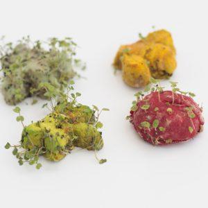 garden friends seeds-1. Tarjeta con semillas